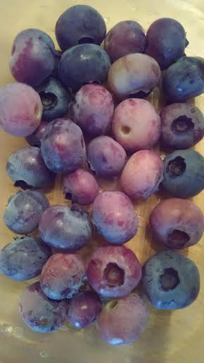 Blueberries - 6-28-2016