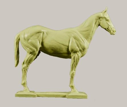 horsebody800pixtan