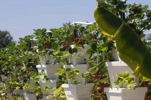 hydroponics.02