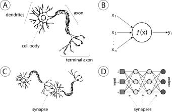 synapse2