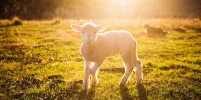 What is Passover? How is Jesus the Final Passover Lamb?