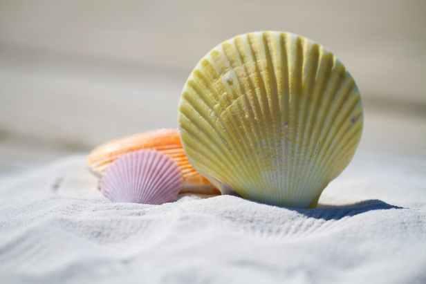 beach sand shells massage