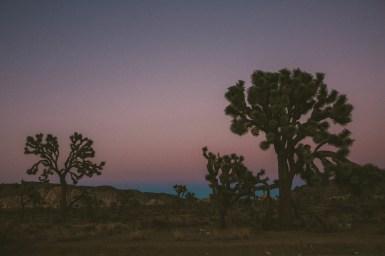 LIFESTYLE photos: Joshua Trees