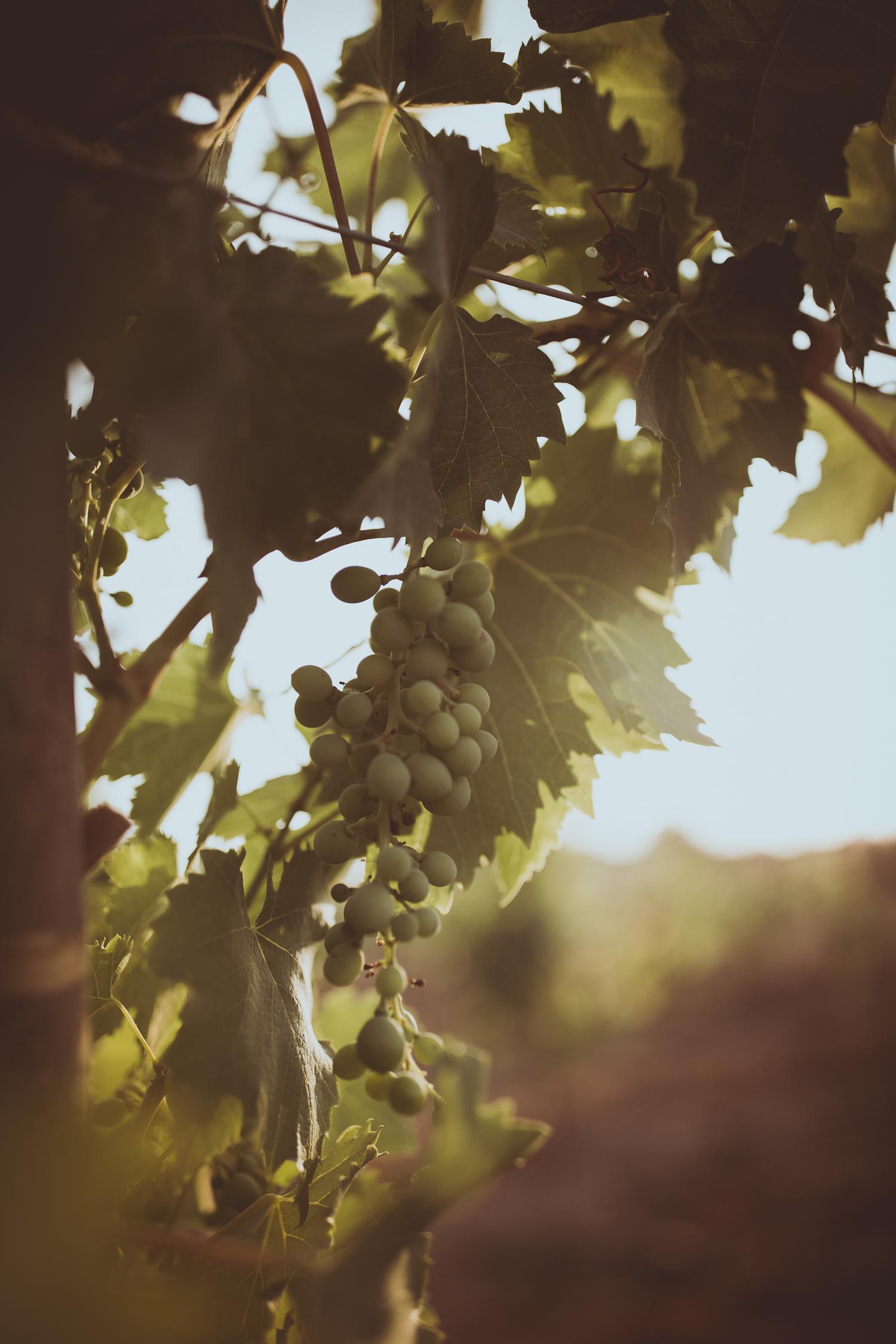 Winery Ica Peru