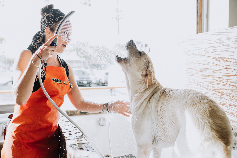 San Diego Dog grooming