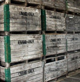 Crane Orchard crates; Fennville, MI