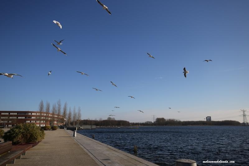Viajando por 40 cidades da Holanda: 10 ª cidade – Almere