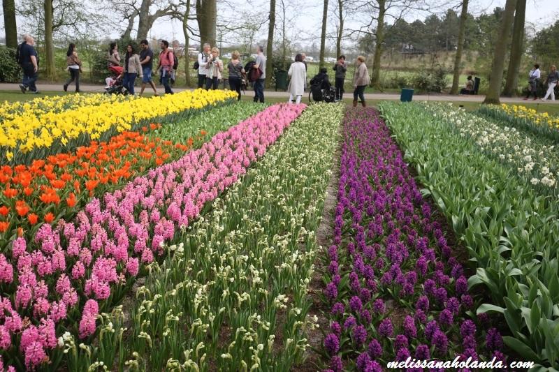 Flores Keukenhof