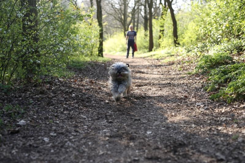 Como levar cachorro para Holanda
