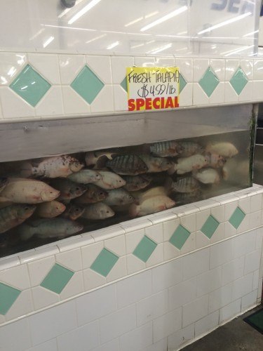 Tilapia at Hong Kong Market