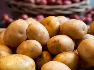 Yukon Gold Potatoes sit in a basket at a local farmers market st