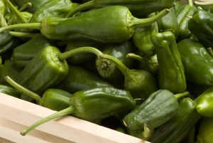 Green peppers. Spanish cuisine. Pimientos de Padrn.