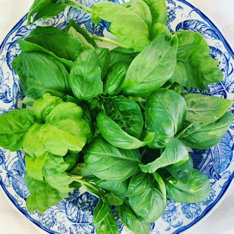 Leaf, Sweet and Genovese Basil for Pesto, June 2021