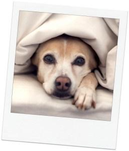 cozy pet