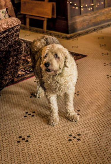 Rosie, the resident dog at the Historic Union Hotel