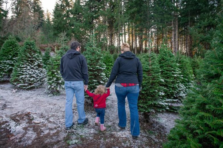Macks Christmas Tree Hunt-7