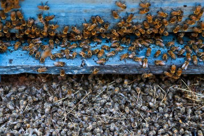Κυψέλες μελισσοκομίας - Kipseles.gr ΓΕΝΙΚΑ