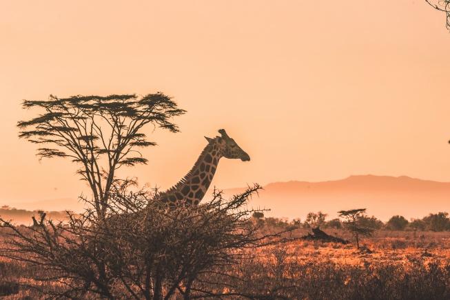 safariye gitmek