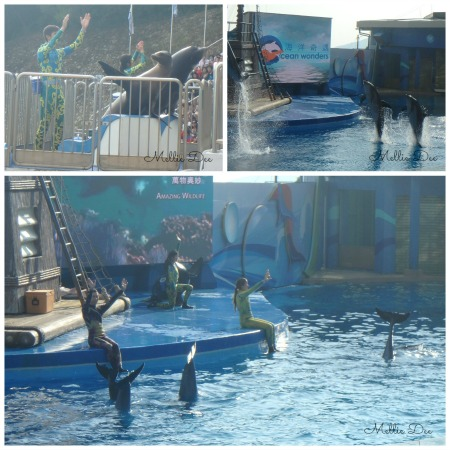 Dolphin and Seal Show | Ocean Park | Hong Kong