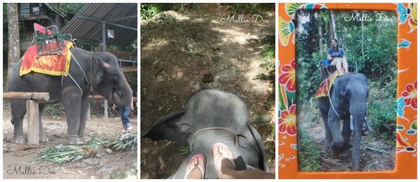 Elephant Ride | Phuket, Thailand