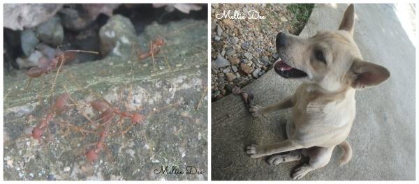 Fire Ants & Dog | Phuket, Thailand