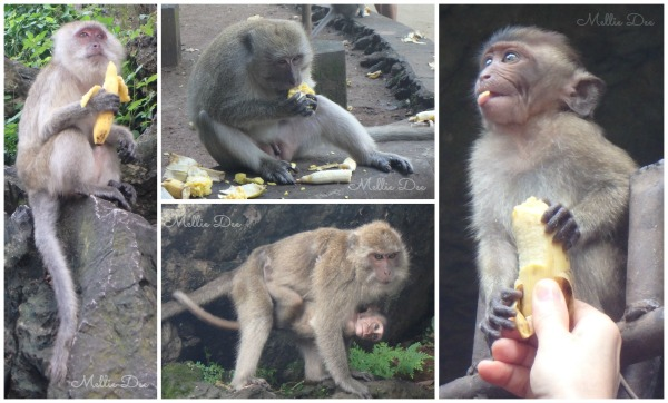 Monkeys | Phuket, Thailand