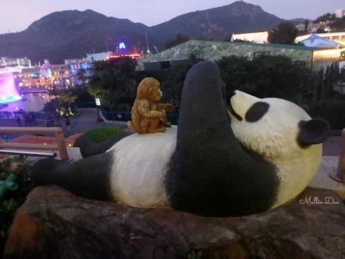 Panda Monkey Ocean Park | Hong Kong