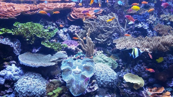 Seattle Aquarium | Seattle, Washington | Under the Sea