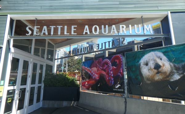 Seattle Aquarium | Seattle, Washington