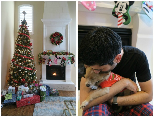 2016 Christmas | Dallas, Texas | Scruffy & Rizzo