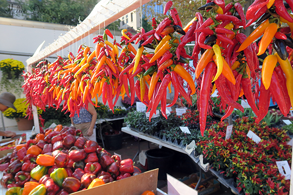 Dane County Farmer's Market | Madison, Wisconsin | Chili Peppers