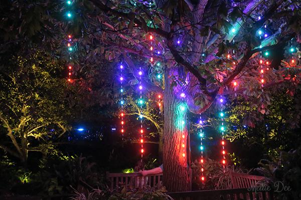 Olbrich Botanical Gardens | Madison, Wisconsin | Sarah & Jacky Wedding: Gleam: Art in a New Light Exhibit 2
