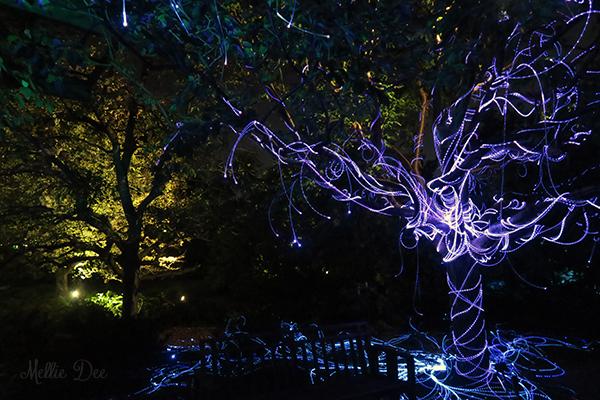 Olbrich Botanical Gardens | Madison, Wisconsin | Sarah & Jacky Wedding: Gleam: Art in a New Light Exhibit 4