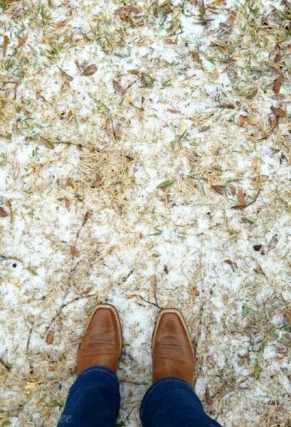 Snowy Grass and Cowboy Boots