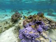 Jardin de corail