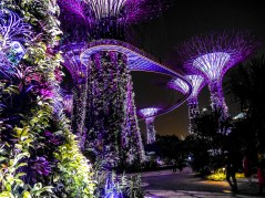 Gardens by the Bay; Supertree Grove