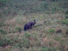 Eléphant au Mazike Lodge, Queen Elizabeth National Park