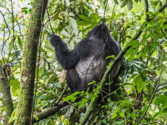 Bwindi Impenetrable Forest-23