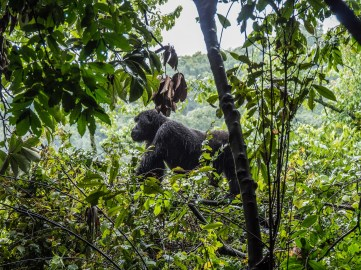 Bwindi Impenetrable Forest-30