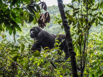 Bwindi Impenetrable Forest-31