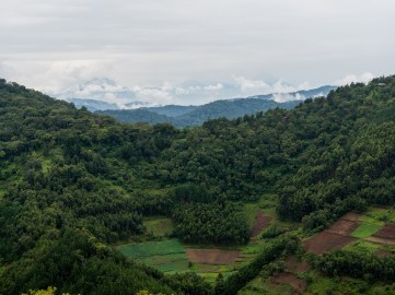Bwindi Impenetrable Forest-74