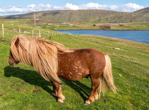 Shetland-13