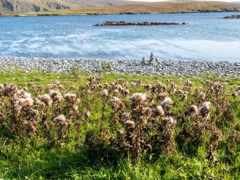 Shetland-25