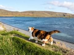 Shetland-27