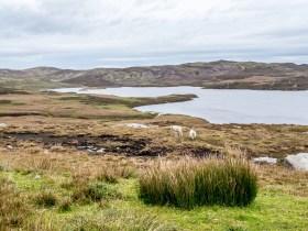 West Minalnda Shetland-3