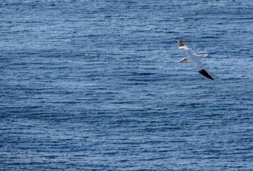 ïles Shetland, Unst : Hermaness National Nature Preserve