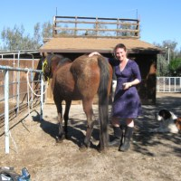 Evolutionary hoof care rasps