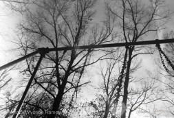 Scipio Swinging - film
