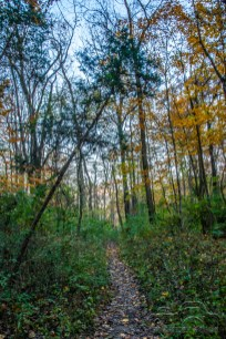The fall season brings bountiful beauty to Muscatatuck Park and Tunnel Mill in North Vernon, Indiana on November 3, 2018