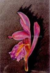 Orchid - NFS • Prints Available